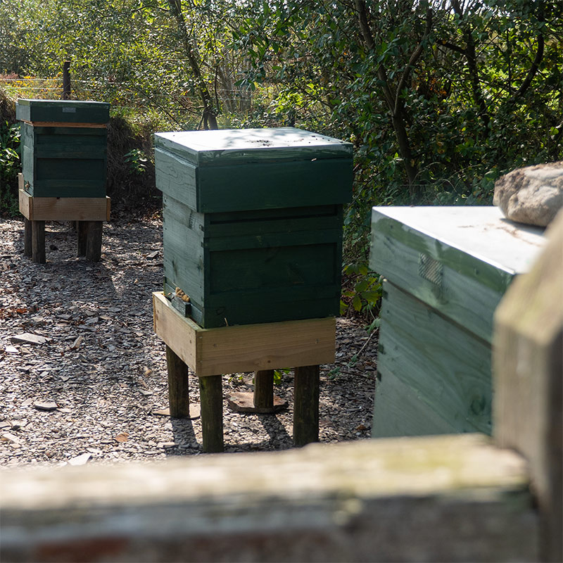 Beef and Bees - An Apiary
